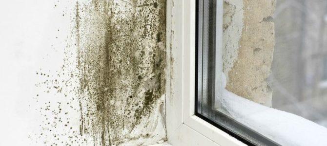 ¿Cómo eliminar el moho de una casa para siempre?